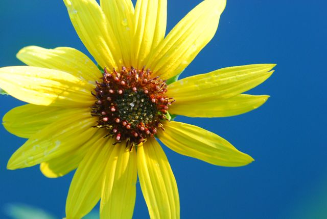 sunflowers  growing with science blog, Beautiful flower