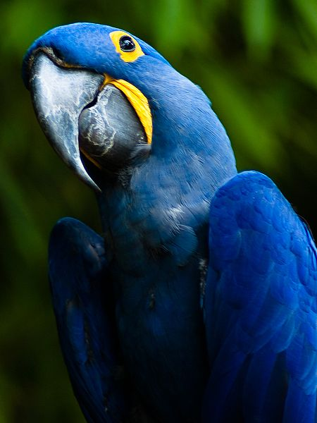 Weekend Science Fun: Birds of the Rain Forest – Growing ...