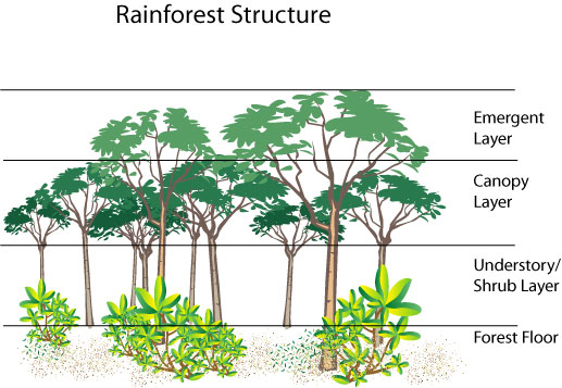 Weekend Science Fun: Birds of the Rain Forest – Growing With ...
