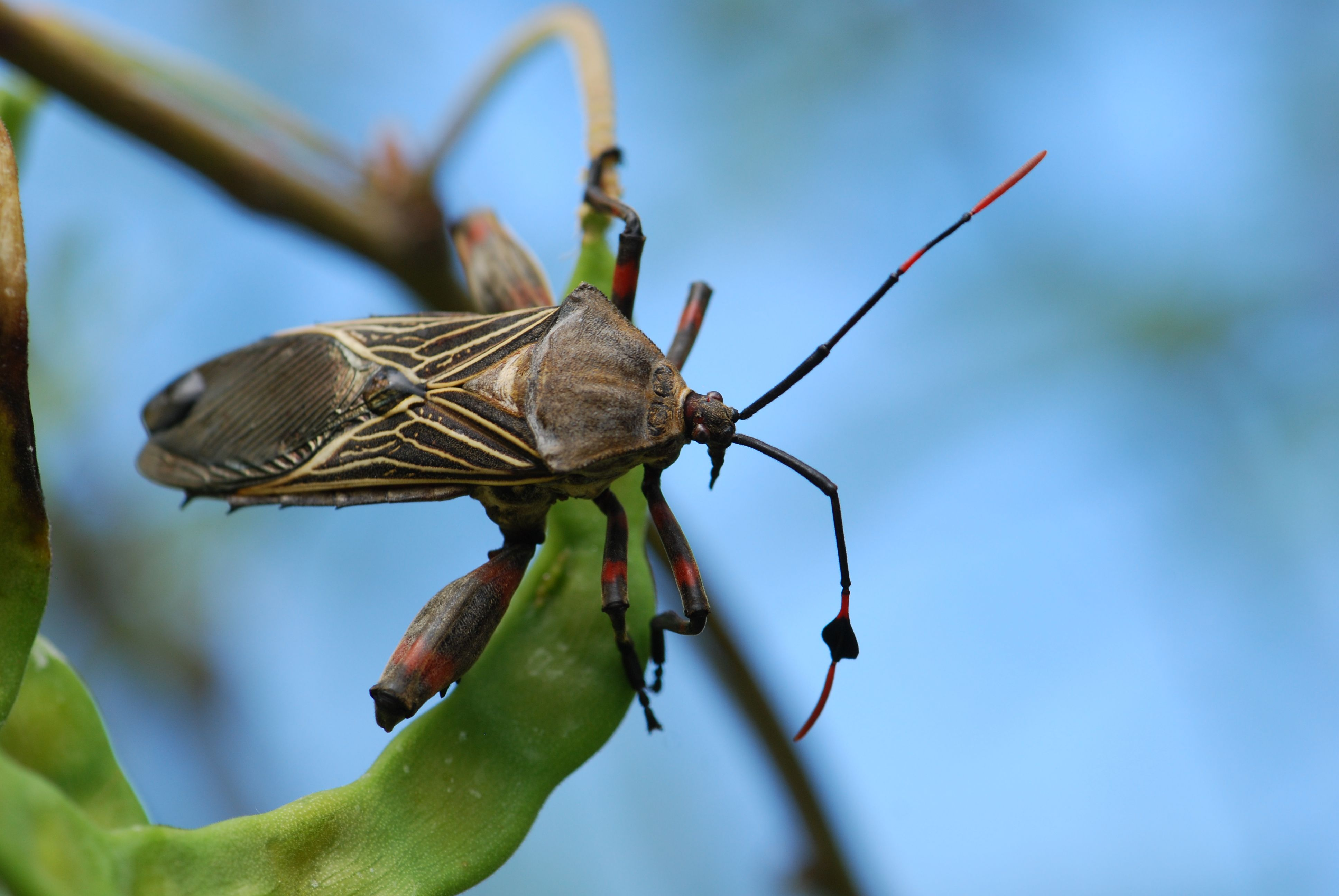 Bug of the Week: Favorite Insect Photos From 2011 ...