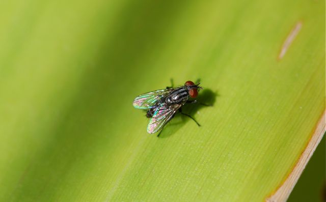 Pictures of baby house flies - House interior