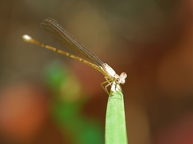 damselfly-best