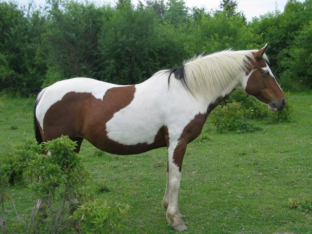Horse Science For Kids Growing With Science Blog