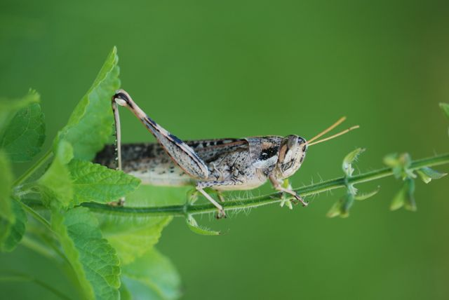 grashopper-still-in-yard