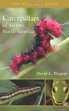 caterpillar-of-eastern