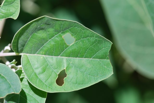leaf-with-holes