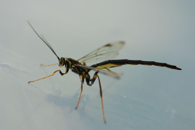 mystery-insect-2
