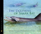 dolphins-of-shark-bay