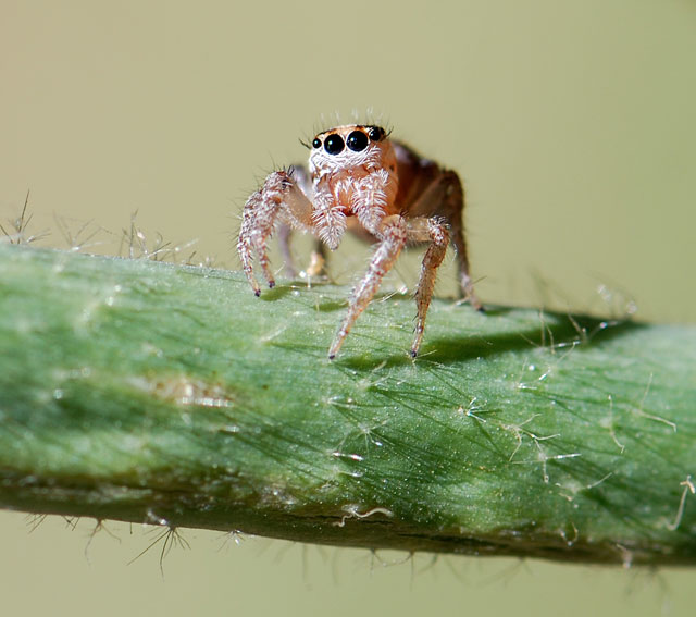 2013-jumping-spider