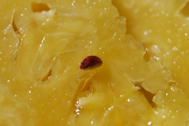 seed-in-pineapple