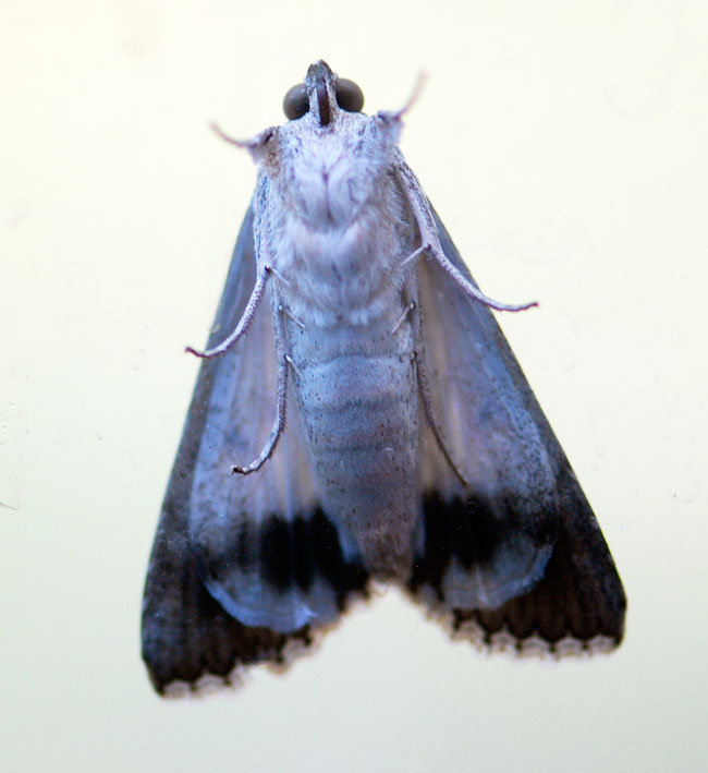 moth-on-window-underneath-1