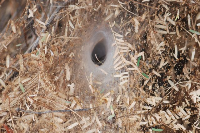 funnel-web-retreat