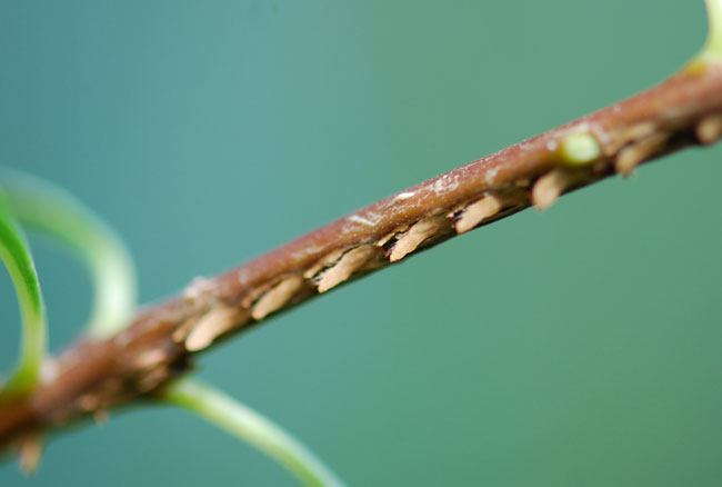 moth eggs – Growing With Science Blog