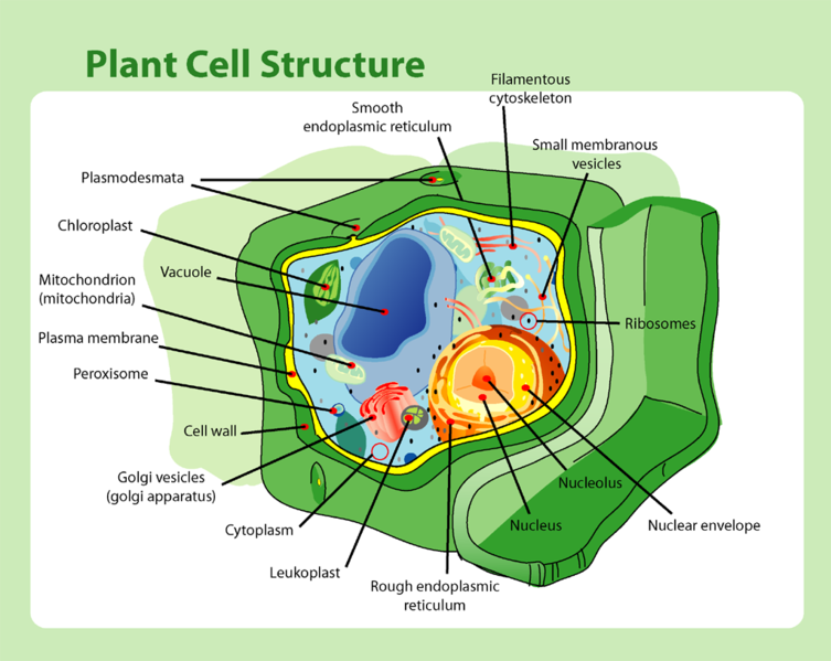Plant_cell_structure