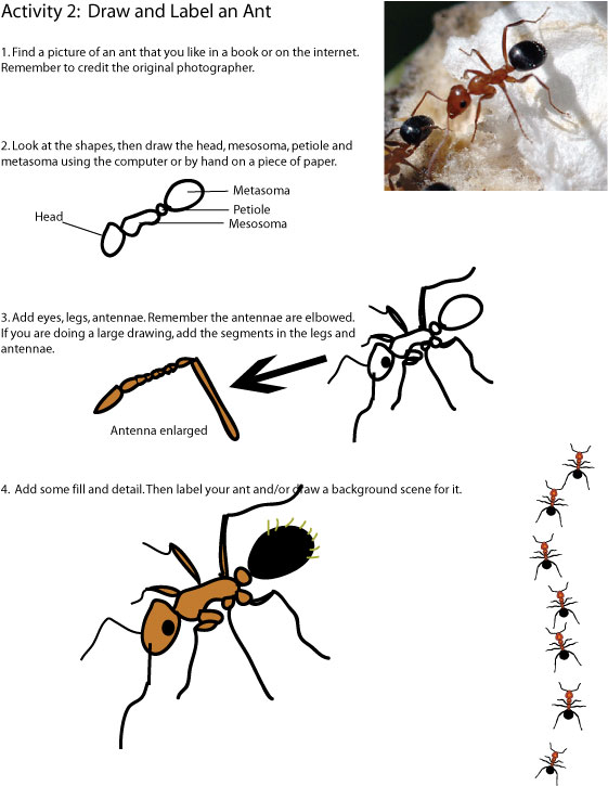 ant-drawing-activity