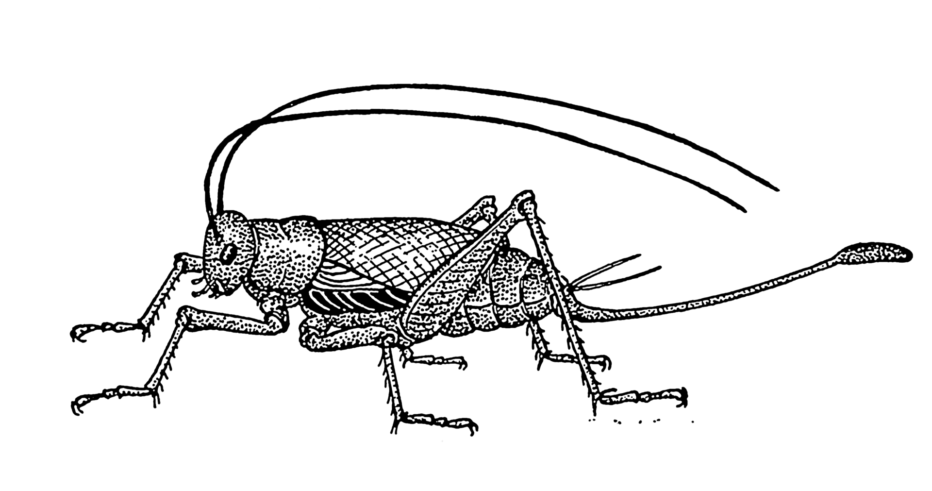 Insect Science Investigations for Kids: Grasshoppers and Crickets ...