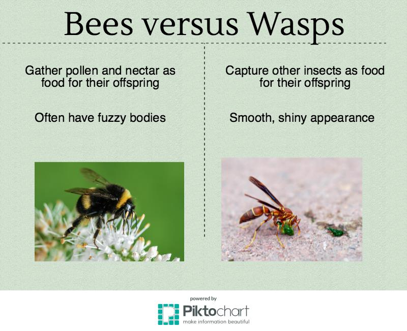 bee-wasp-infographic
