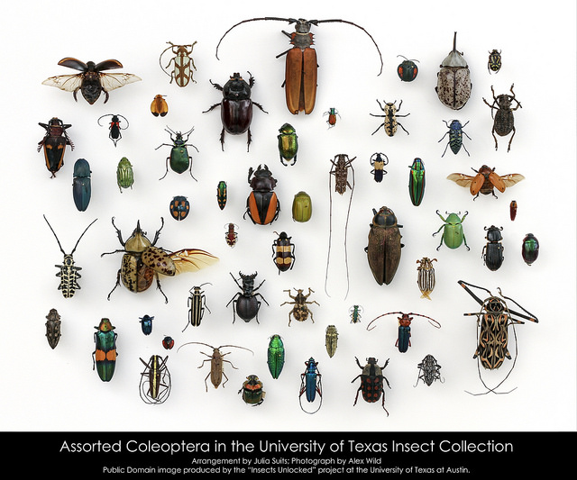 assorted-beetles