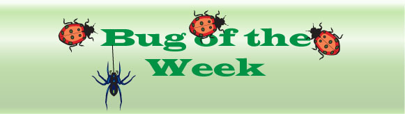 Bug-of-the-week