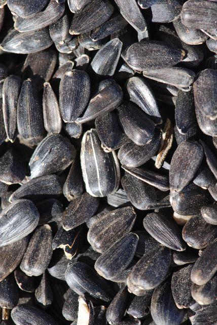 mystery-seed-week-june