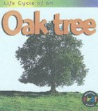 life-cycle-oak-tree