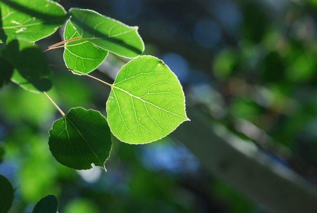 tree-festival-leaf