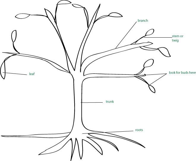 tree-parts