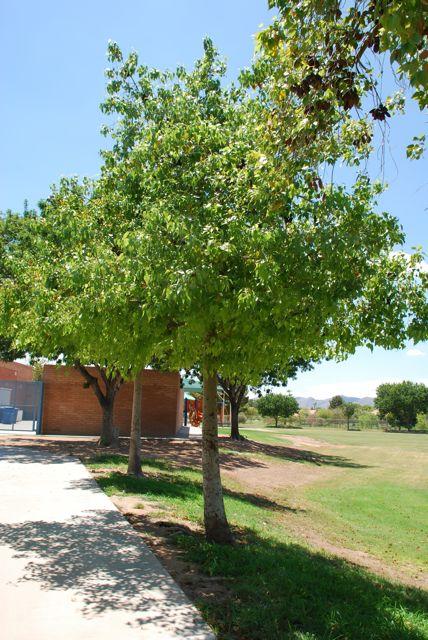Bottle Tree 2