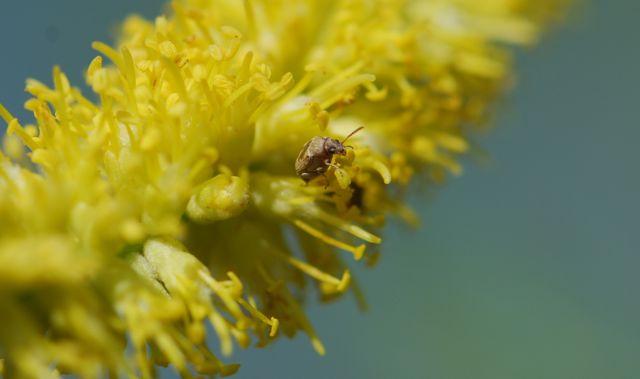 seed-beetle-2