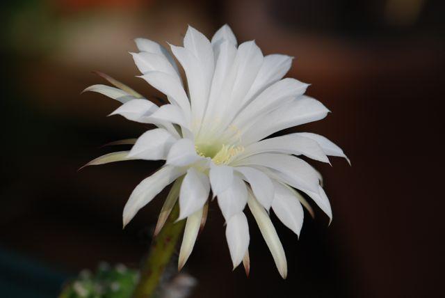 moth-overachier-cactus-good