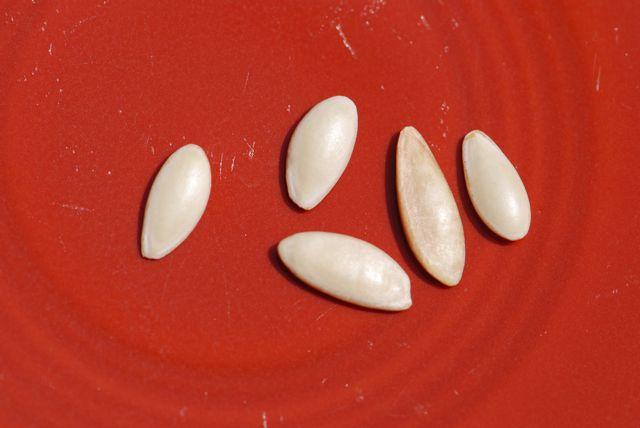 cucumber-seeds
