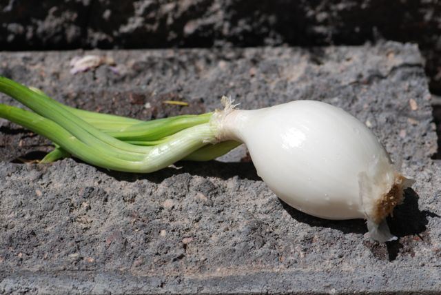 green-onion-bulb