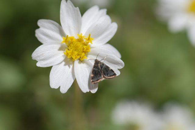moth-brown