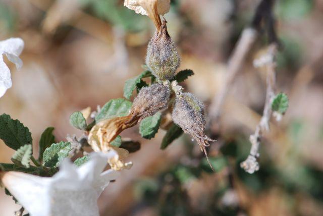lifftle-leaf-seed-formation