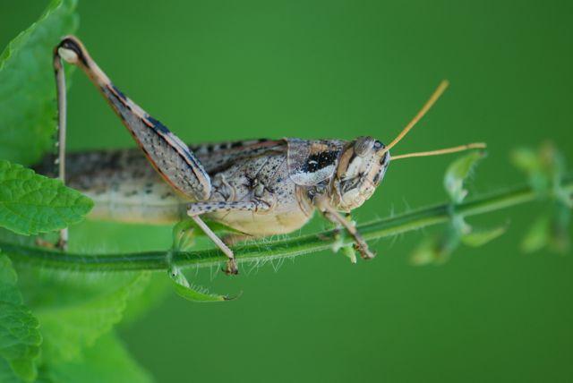 grasshoppper-in-yard