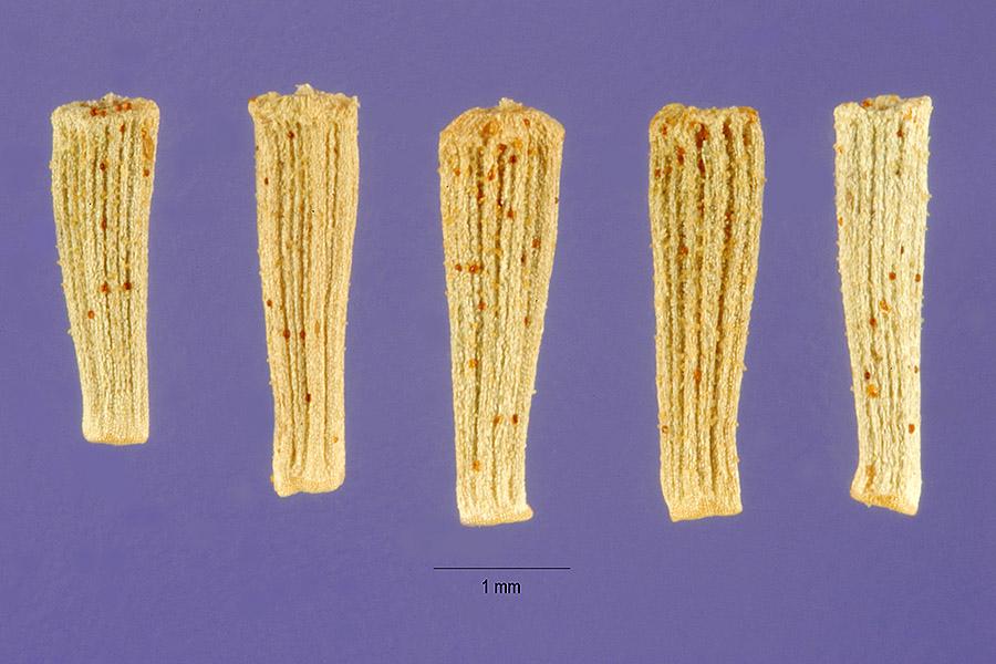 mystery-seeds-usda