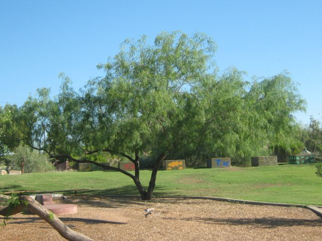honey-mesquite-2