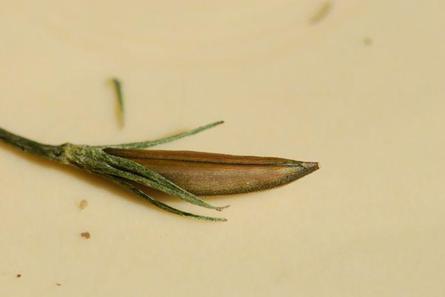 mystery-seeds-173-111