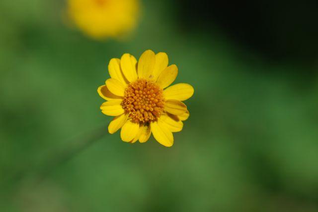 fiveneedle-another-flower