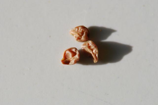 mystery-seeds-1s-seeds