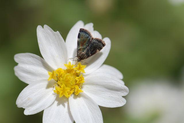 2013-hasy-moth