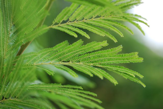 desert-fern-leaves-better