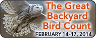 great-backyard bird count 2014