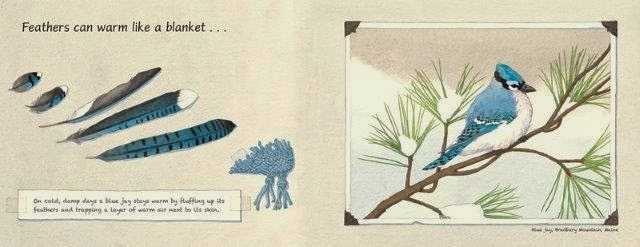 Feathers_page