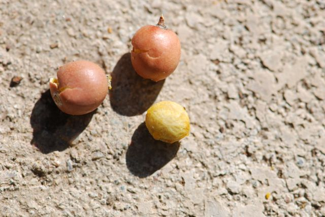 mystery-seeds-202-2