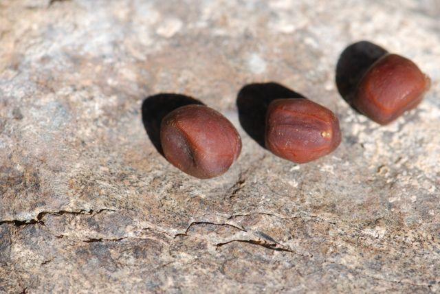 mystery-seeds-206-1