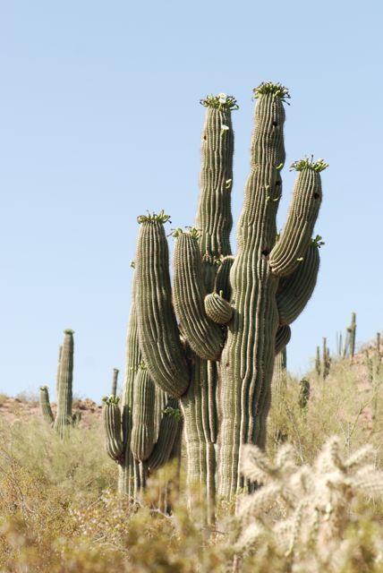 saguaro-example