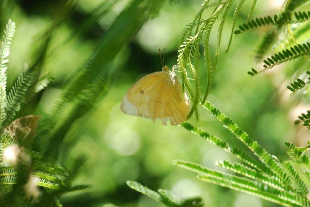 desert-fern-butterfly-2