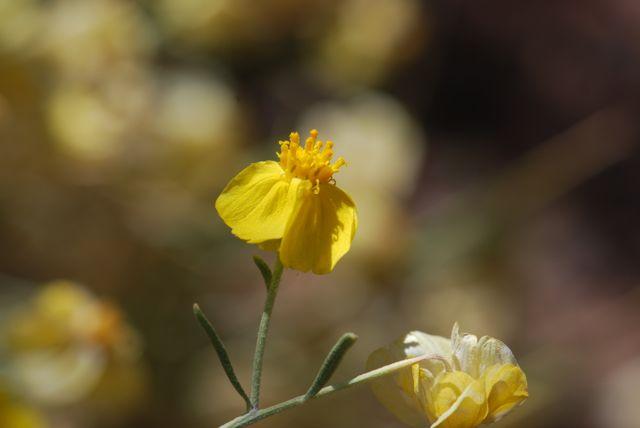 paperflower-again