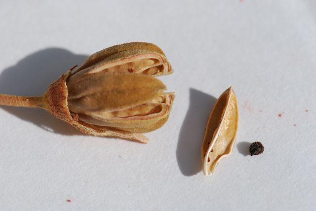 mystery-seed-212-pod-seed-3